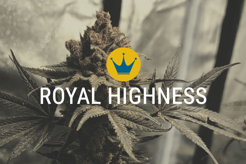 Semi di marijuana terapeutica Royal Highness