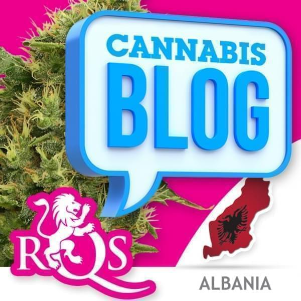 La cannabis in Albania