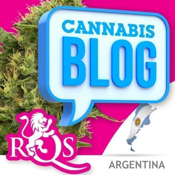 Cannabis in Argentina