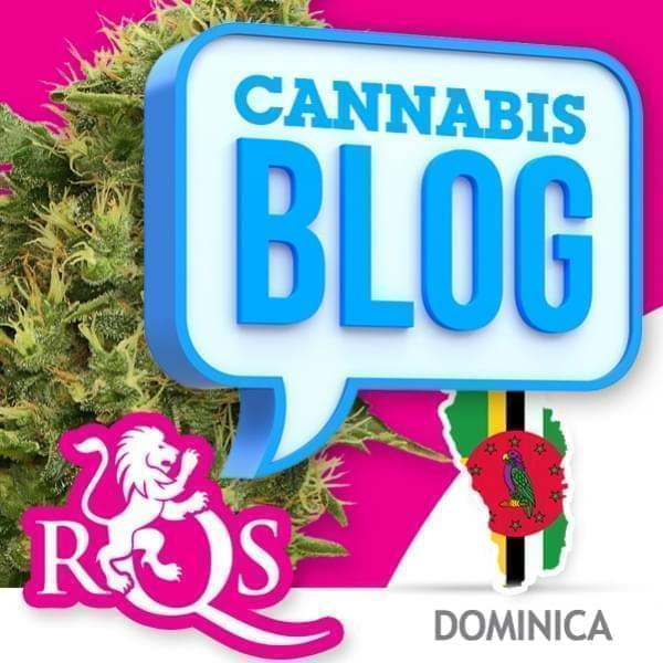 La cannabis in Dominica
