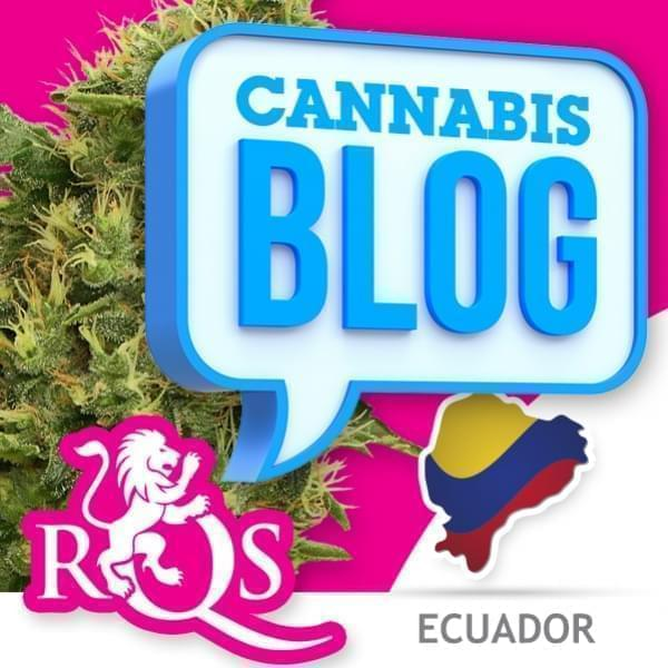 La cannabis in Ecuador