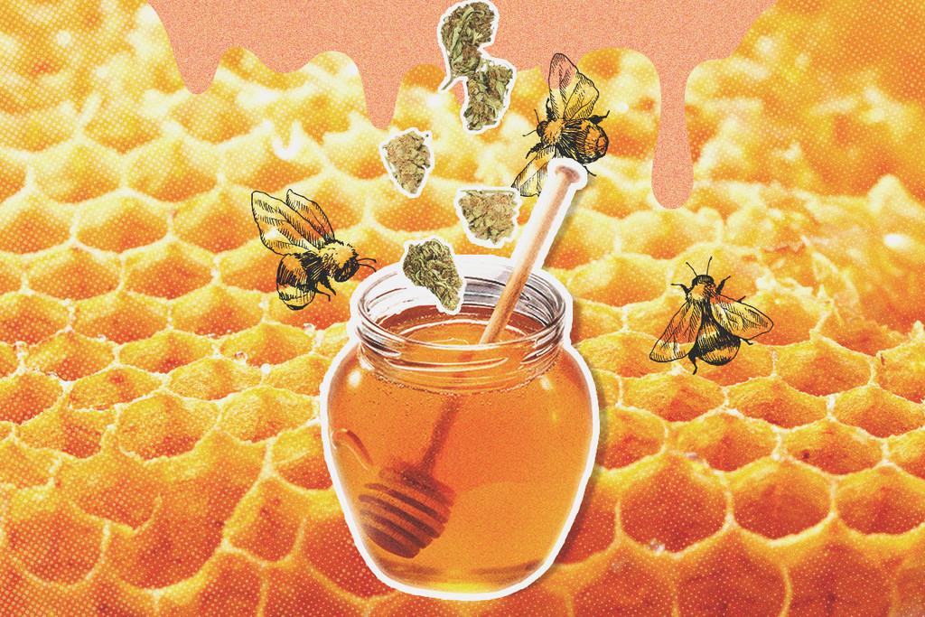 Come fare in casa il miele alla tintura di cannabis rqs blog - Come fare il cappotto alla casa ...
