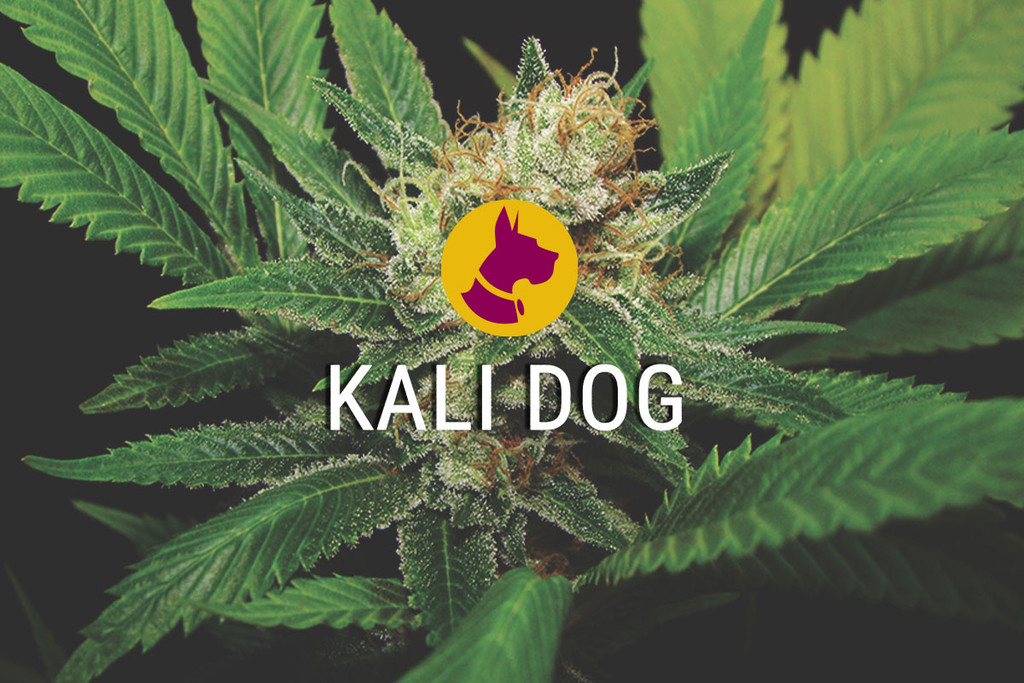 Kali Dog Reale ChemDawg