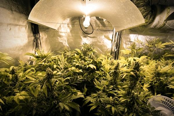 La guida sulle luci artificiali per la coltivazione della marijuana