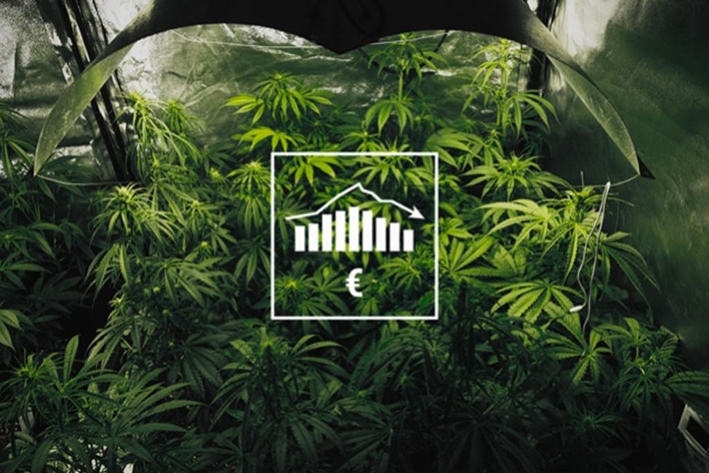 Coltivare Cannabis Indoor e Outdoor con un Budget Limitato