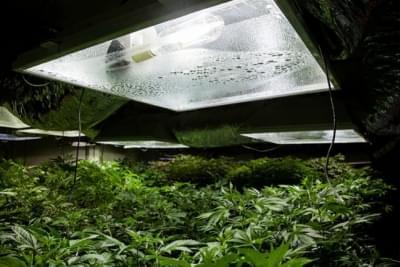 I diversi tipi di luci per la coltivazione della cannabis: pro e